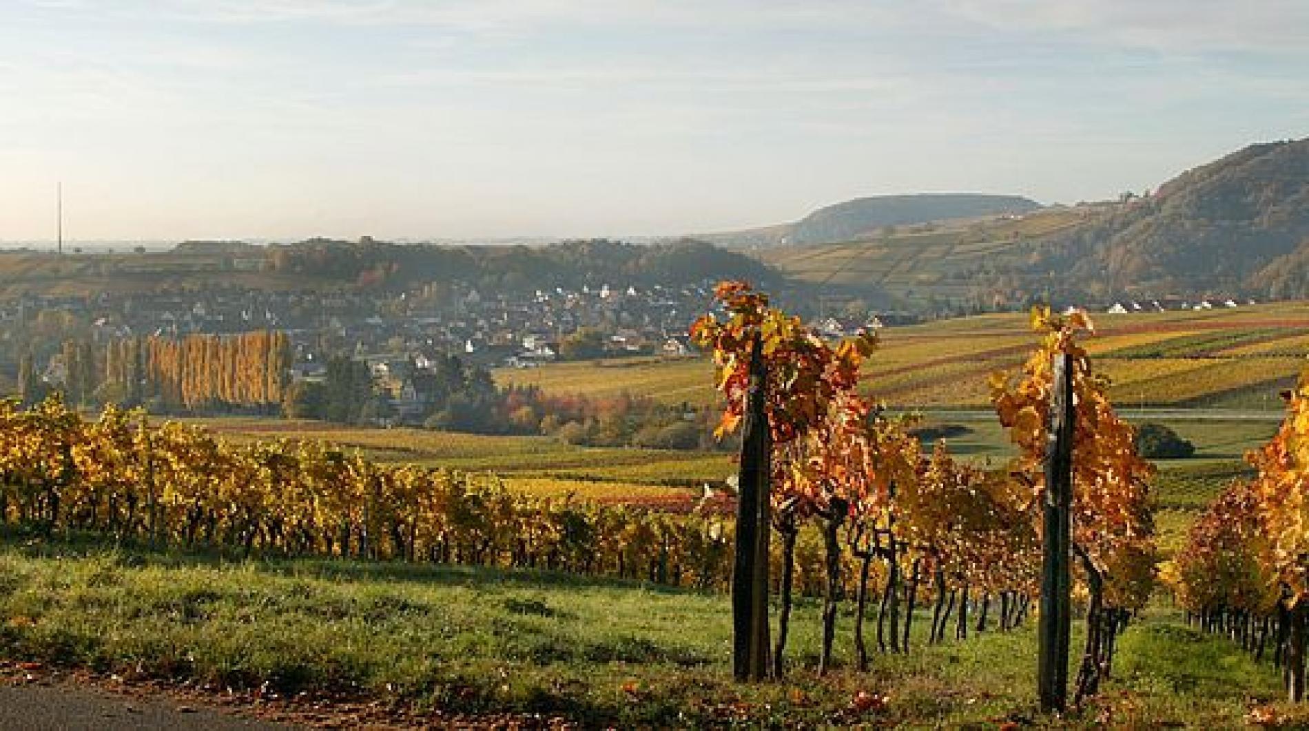 La route des vins allemande