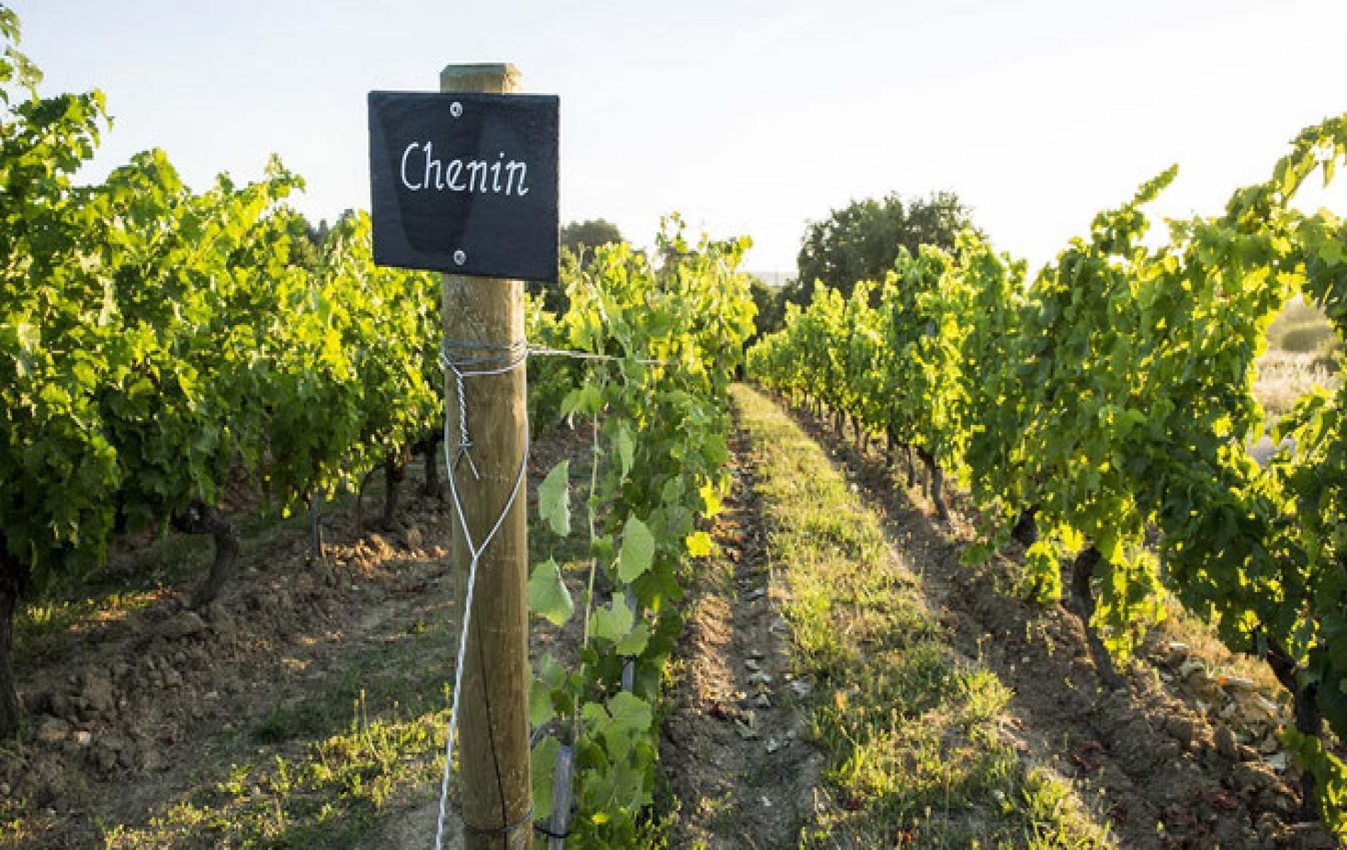 Le musée de la vigne et du vin d'Anjou