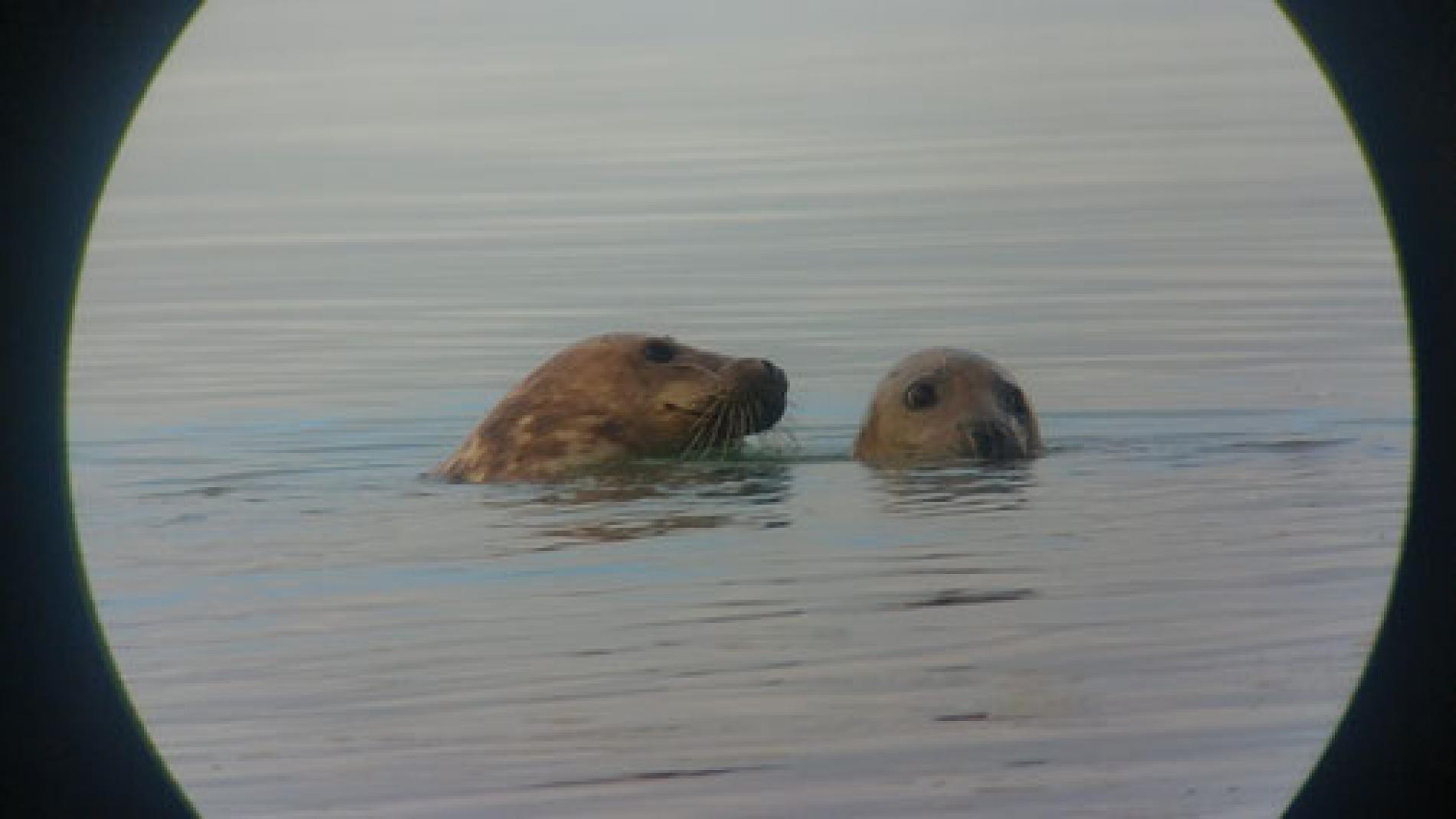 Seal Watching