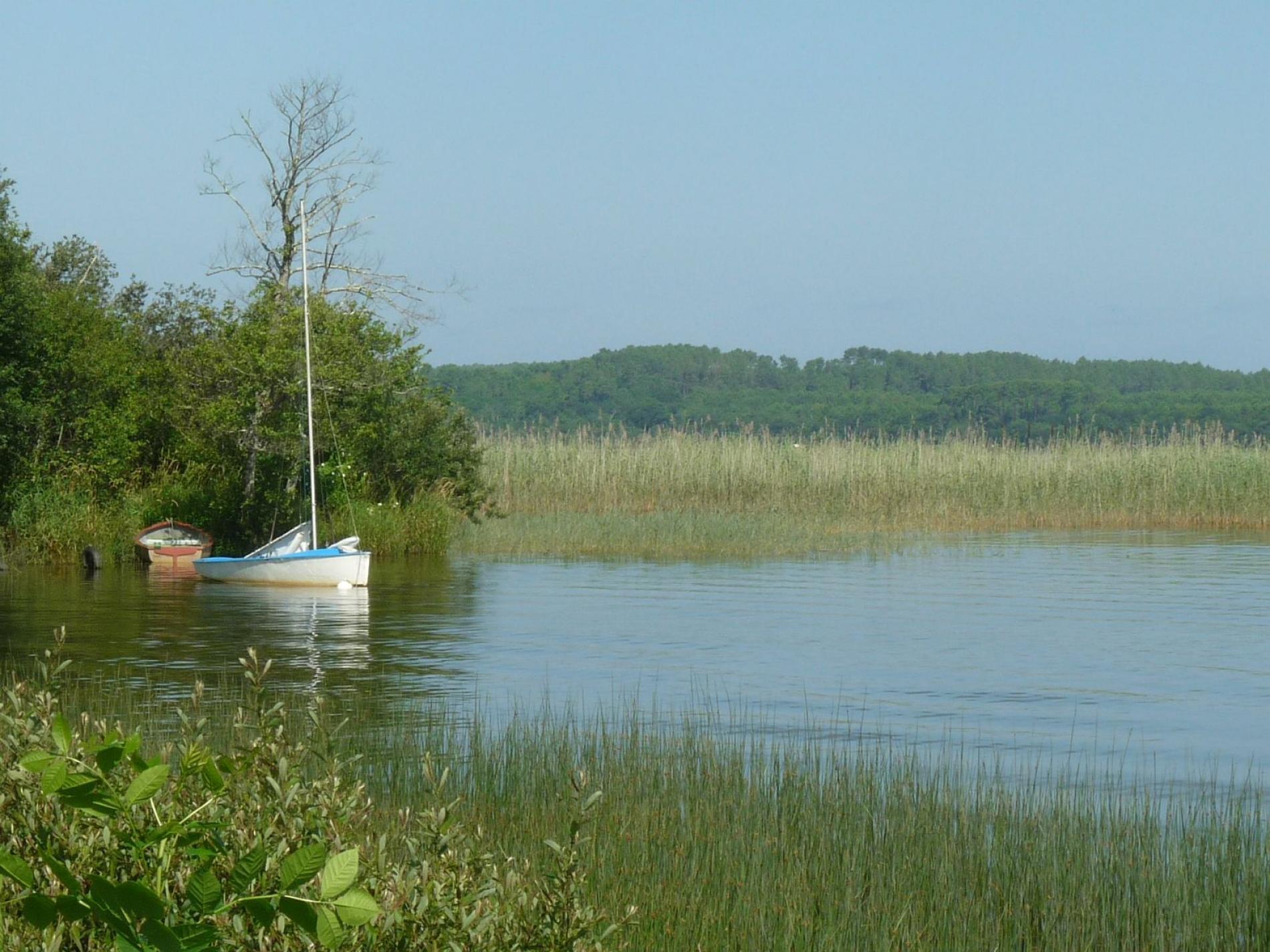 La nature omniprésente : La forêt et le Lac d'Aureilhan