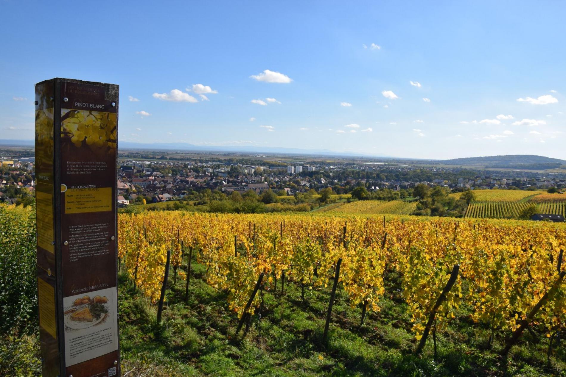 Route des vins d'Alsace<br>